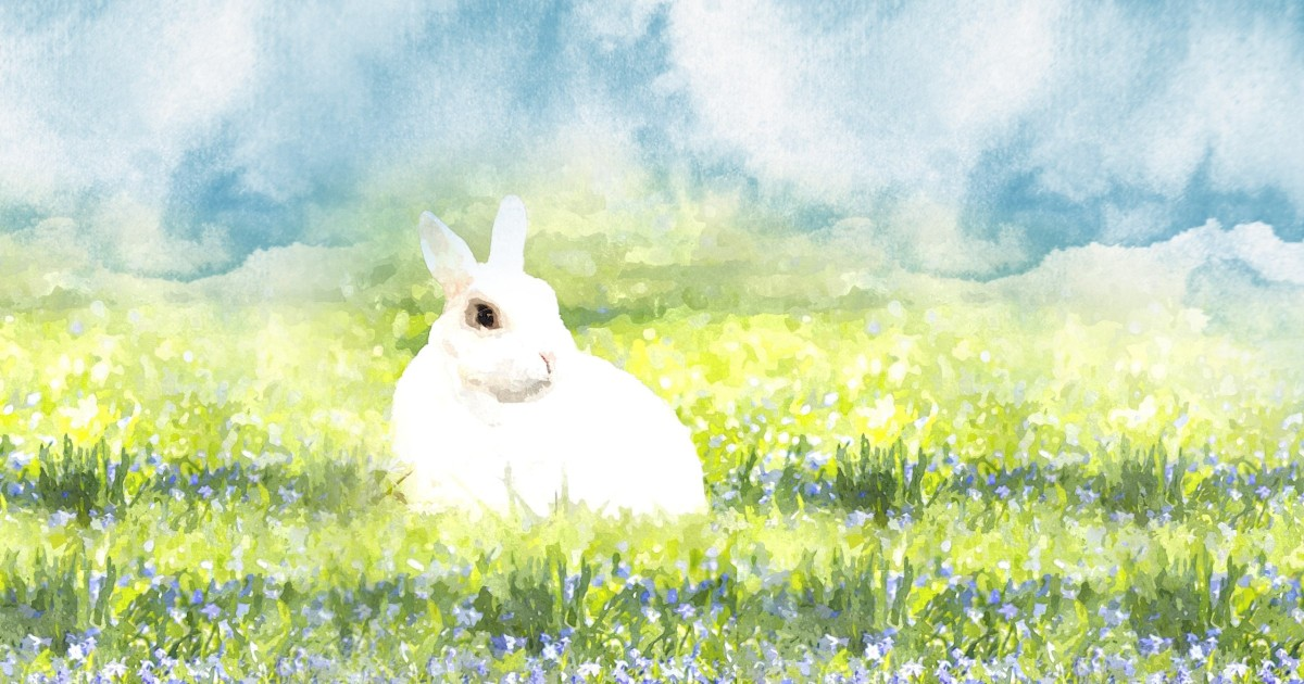 White bunny - a sign?